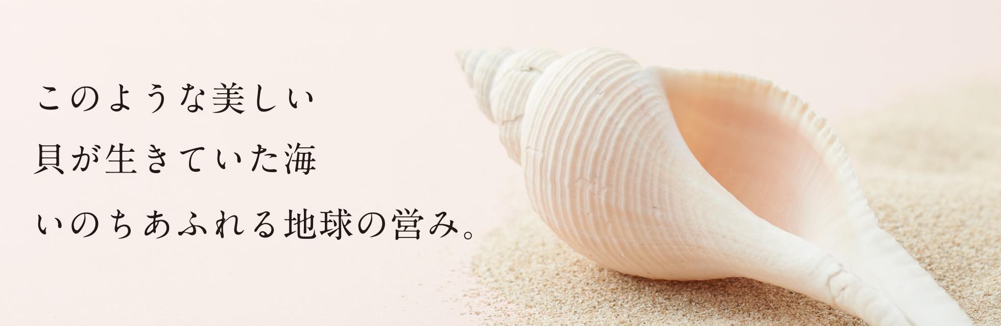 このような美しい 貝が生きていた海 いのちあふれる地球の営み。
