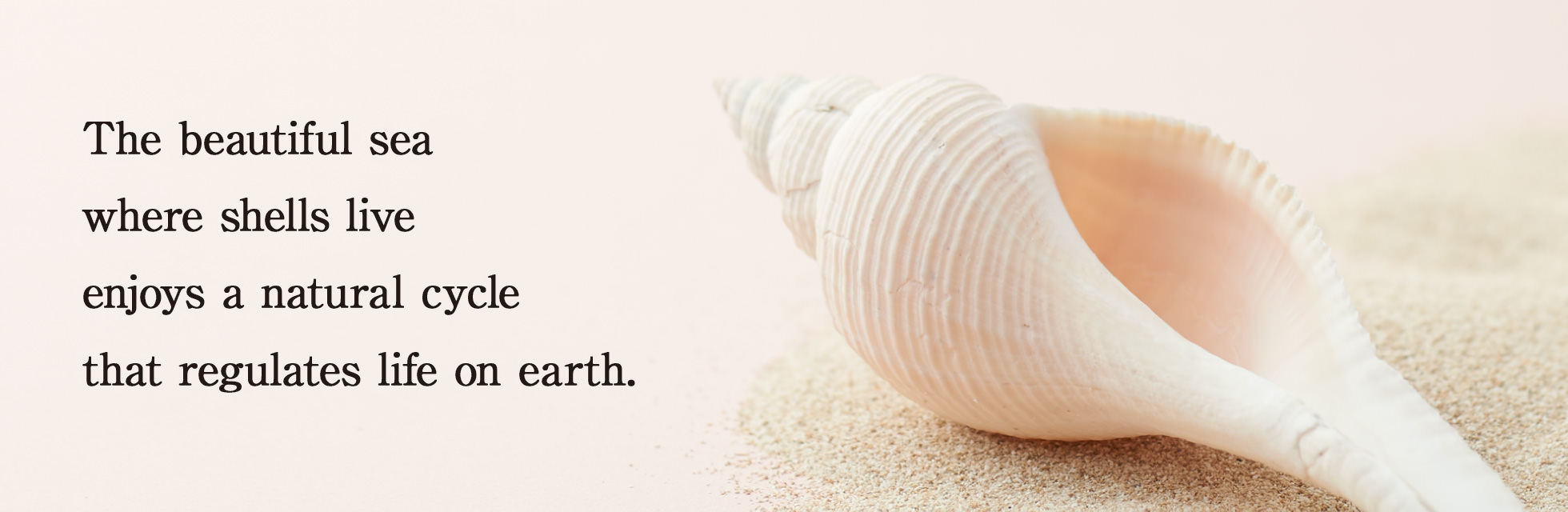 The beautiful sea where shells live enjoys a natural cycle that regulates life on earth.