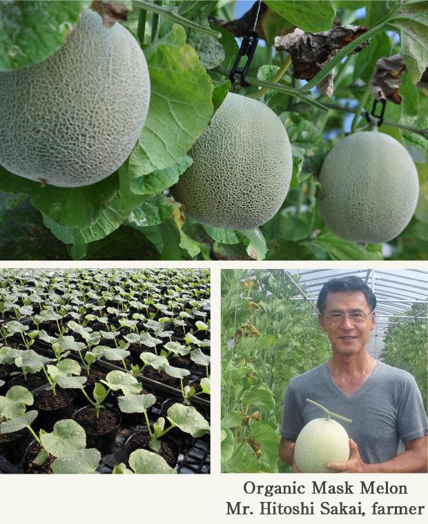 Organic Mask Melon Mr. Hitoshi Sakai, farmer