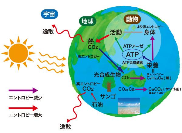 炭素循環による生命活動の維持