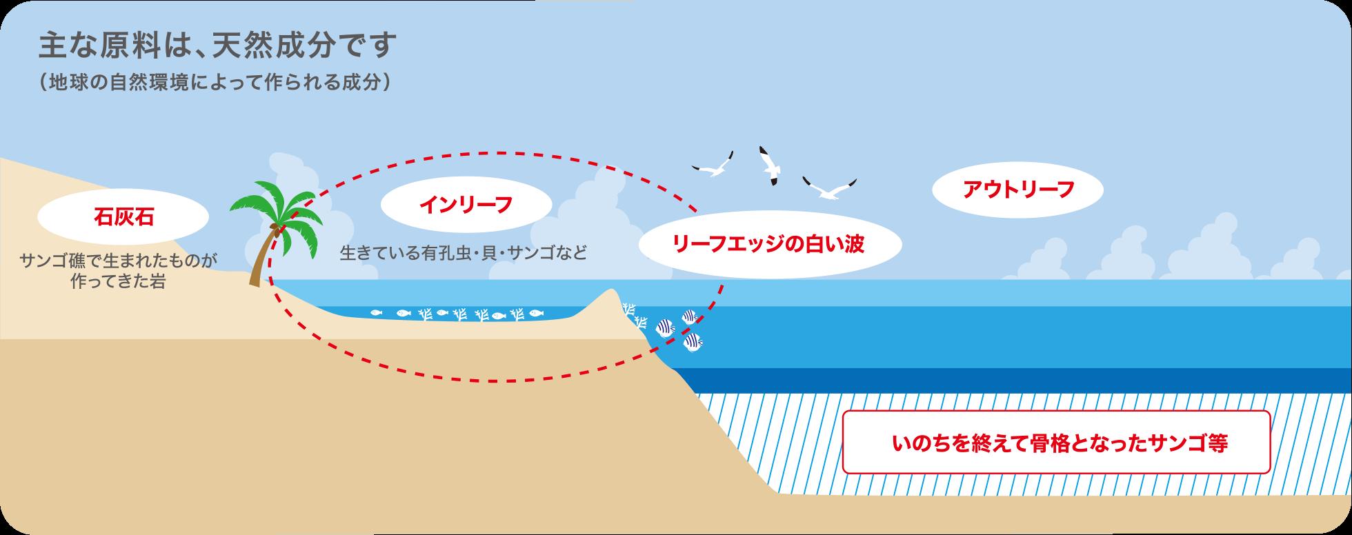 Coral Biomineralization