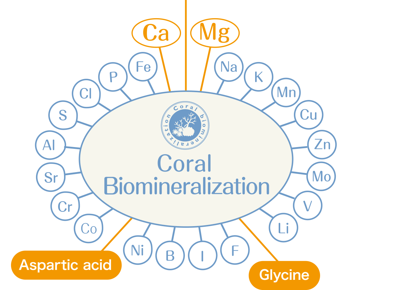 Coral Biomineralization